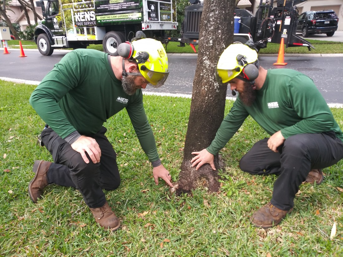 Tarpon Springs Tree Services | Ken's Tree Services - IMG_20190130_150010