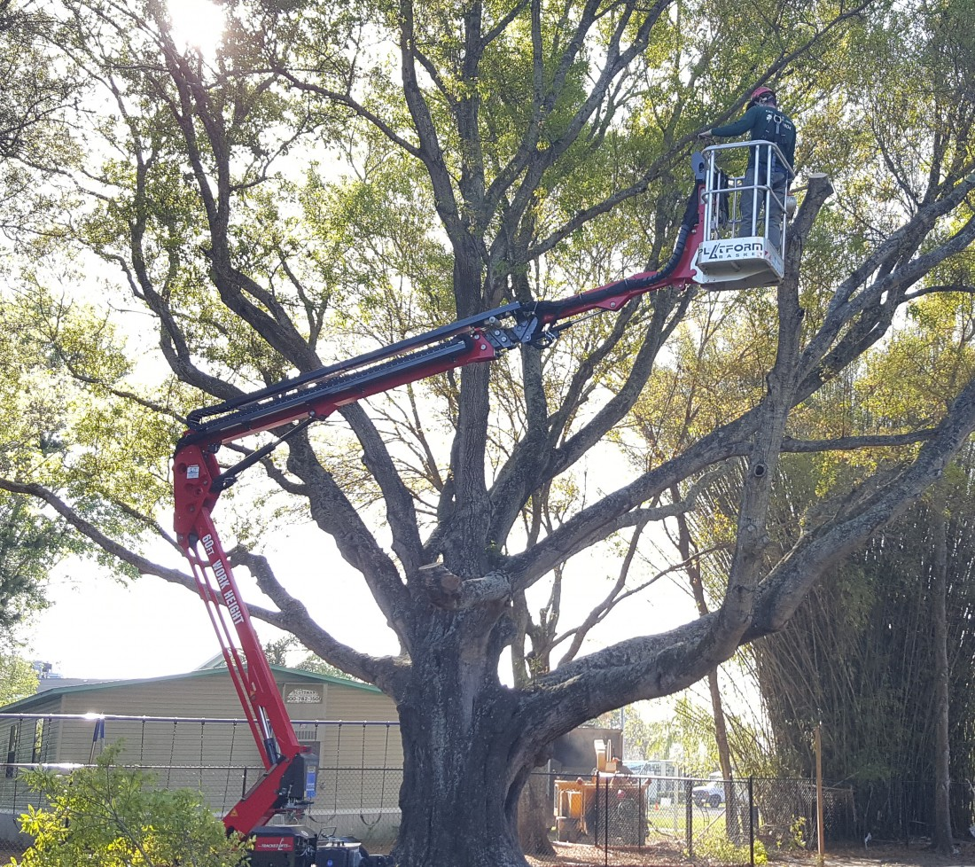 Tarpon Springs Tree Services | Ken's Tree Services - Tree_Removals_Picture_-_new_lift
