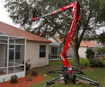 Tree Removal and Trimming: Tarpon Springs, FL | Ken's Tree Service - hazard