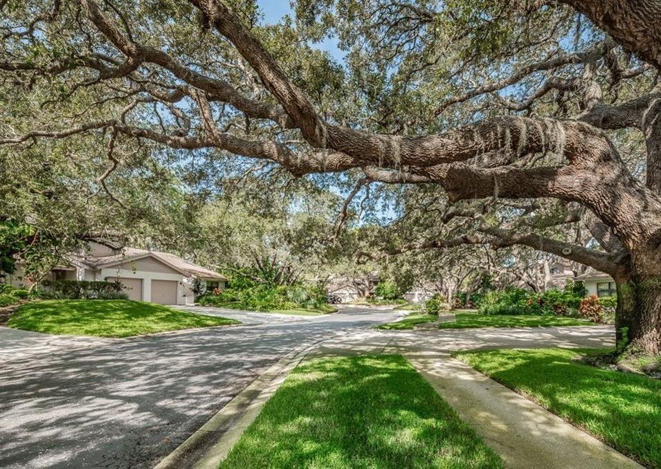 Tarpon Springs Tree Services | Ken's Tree Services - whispering_woods_file_photo