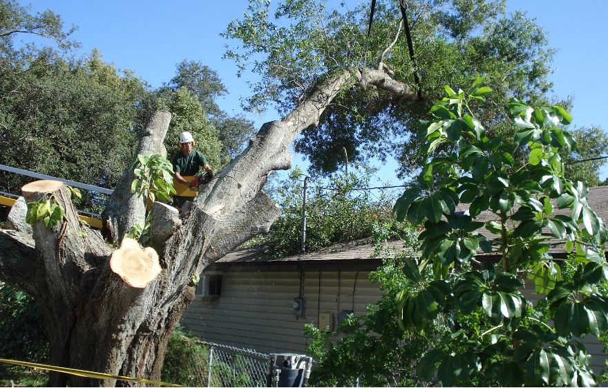 Tarpon Springs Tree Services | Ken's Tree Services - service-removal-bg