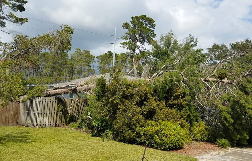 Tarpon Springs Tree Services | Ken's Tree Services - service-storm-bg